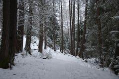 Das Holz an einem Wintertag Lizenzfreie Stockfotografie