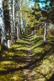 Das Holz im Frühjahr lizenzfreies stockfoto