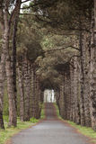 Das Holz im Wald Lizenzfreie Stockbilder