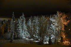 Das Holz ist reizend tief, dunkel und: Gespritzte Bäume am Maränen-Bergdorf lizenzfreies stockfoto
