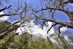 Das Holz und die Landschaft von Weißwolken des blauen Himmels Lizenzfreie Stockbilder