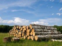 Das Holz unter dem Himmel Stockfoto