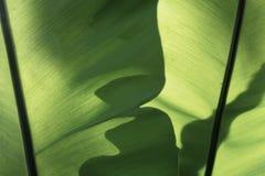 Das horizontale des grünes Blatt-strukturierten Hintergrundes Lizenzfreies Stockfoto