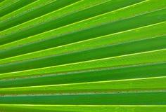 Das horizontale des grünes Palmblatt-strukturierten Hintergrundes Stockbild