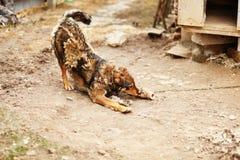 Das Hundeporträt Stockfoto