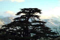 Das ikonenhafte Schattenbild einer Libanonzeder - mit einer Ansicht in Richtung zu Tannourine stockfotos