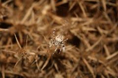 Das Insekt Stockbild