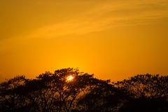 Das ist ein Bild, wenn die Sonne mich gefangennahm es hinten von einem Baum einstellt die Sonne schaut überraschend stockfotos