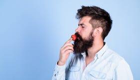 Das ist wie Geschmacksommer Bemannen Sie den hübschen Hippie mit langem Bart Erdbeere essend Hippie genießen saftiges reifes Rot lizenzfreie stockfotos