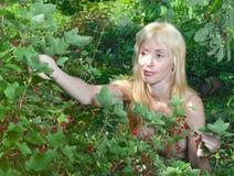 Das junge schöne Mädchen nahe roter Johannisbeere. Stockfoto
