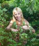 Erfassung der roten Johannisbeere in einem Garten am sonnigen Tag des Sommers Stockfotos