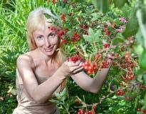 Das junge schöne Mädchen nahe zu einem Busch einer roten Johannisbeere. Porträt an einem sonnigen Tag Stockfotos