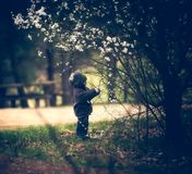 Das Jungenspielen im Freien mit Kirsche blüht am Frühlingstag Stockfotografie