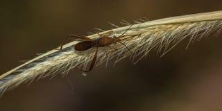 Das Käfer Lizenzfreies Stockbild