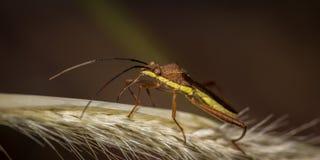 Das Käfer Stockfotografie