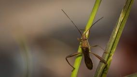 Das Käfer Stockbilder