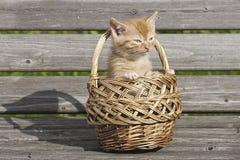Das Kätzchen Stockfoto