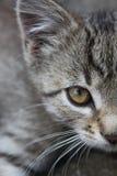 Das Kätzchen Stockbilder