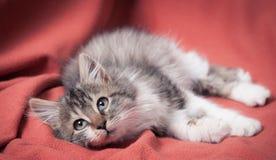 Das Kätzchen auf dem orange Mantel Stockbild