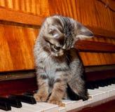 Das Kätzchen, das auf der Klaviertastatur sitzt Lizenzfreies Stockbild