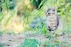 Das Kätzchen, das im Laub sich versteckt, schaut ein kleines unbewegliches und wachsames Opfer Lizenzfreie Stockbilder