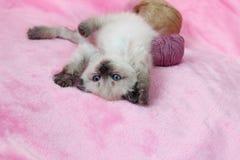 Das Kätzchen, das an liegt, ziehen sich mit Strängen zurück lizenzfreie stockfotos