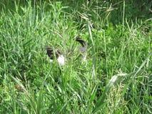 Das Kätzchen im Gras Stockfotos