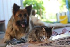 Das Kätzchen isst Stockbild