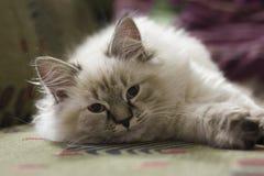 Das Kätzchen liegt auf der Couch Lizenzfreie Stockfotos