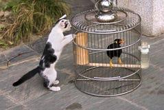 Das Kätzchen und die Drossel Stockfotografie