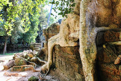Das Königreich Kambodscha Angkor Wat Stockbilder