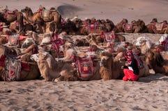 Das Kamel und die Frau in der Wüste Stockbilder