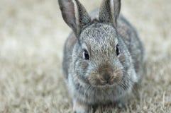 Das Kaninchen stockbilder