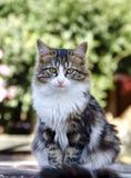 Das Katzeportrait lizenzfreies stockfoto