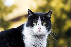 Das Katzeportrait Stockfotografie