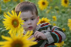 Das Kind in den Sonnenblumen Stockbild