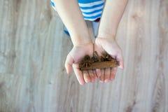 Das Kind hält in seinen Händen eine Zimtstange, Jamaikapfeffer, Ingwer, Sternanis, lizenzfreie stockfotografie