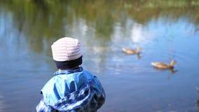 Das Kind sitzt auf einer Bank nahe dem See im Park Wildenteschwimmen auf dem See Ein schöner szenischer Platz Wege in stock video footage