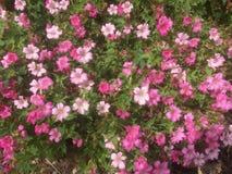 Das Kissen von rosa Blumen stockbild