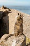 Das kleine Eichhörnchen auf dem Felsen lizenzfreies stockfoto