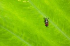 Das kleine Insekt auf grünem Hintergrund lizenzfreies stockfoto