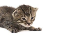 Das kleine Kätzchen lokalisiert auf Weiß Lizenzfreie Stockfotografie