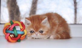 Das kleine rote Kätzchen starrt entlang eines Spielzeugs entlang eines Fensters an Stockfotos