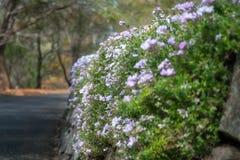 Das Klettern blüht auf einer Gartenwand an botanischem Garten Berg Tomah lizenzfreies stockbild