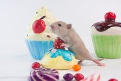 Das Konzept der Gelegenheit Ratte mit bunten Bonbons stockfotografie