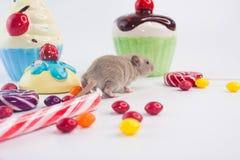 Das Konzept des Geburtstages Ratte auf dem Hintergrund von Feiertagsbonbons stockfoto