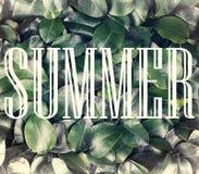 Das Konzept: Sommernatur, Sommerferien, Reise Die Aufschriftsommerzeit in einem weißen Rahmen gegen einen Hintergrund von frische Stockbild