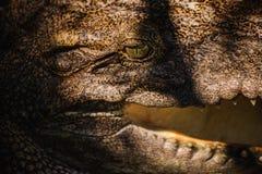 Das Krokodil in Thailand-Abschluss oben Stockbilder