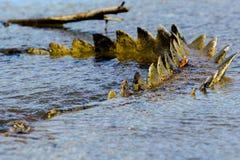 Das Krokodilendstück stockbilder