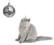 Das Kätzchen, das Weihnachtskugel betrachtet, trennte Stockbild